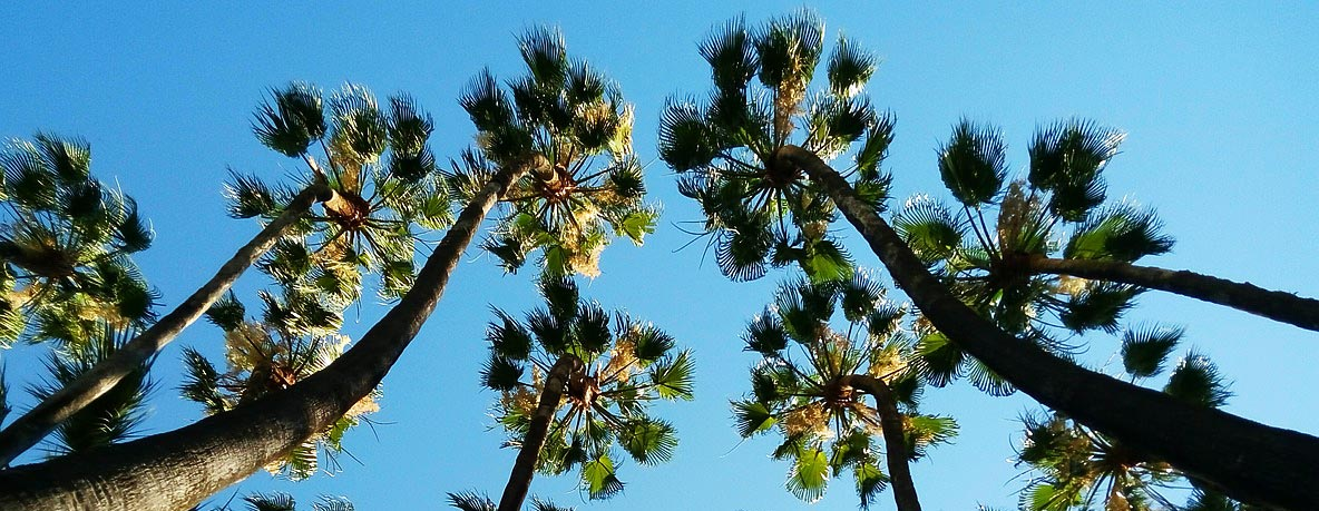 Palms and blue sky are typical when you own Cancelada property.