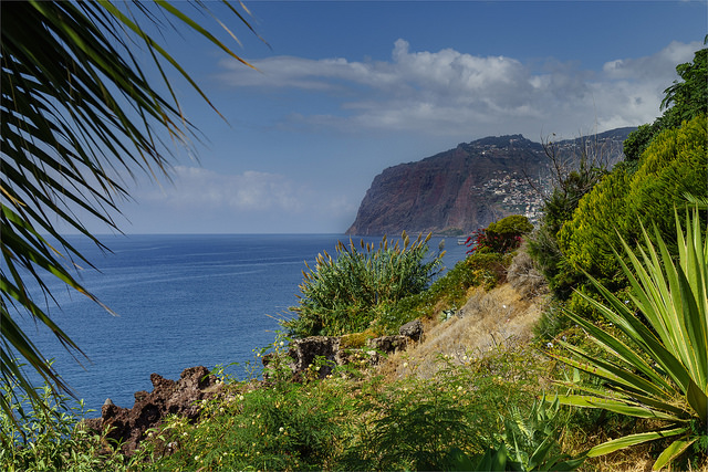 madeira casafari metasearch
